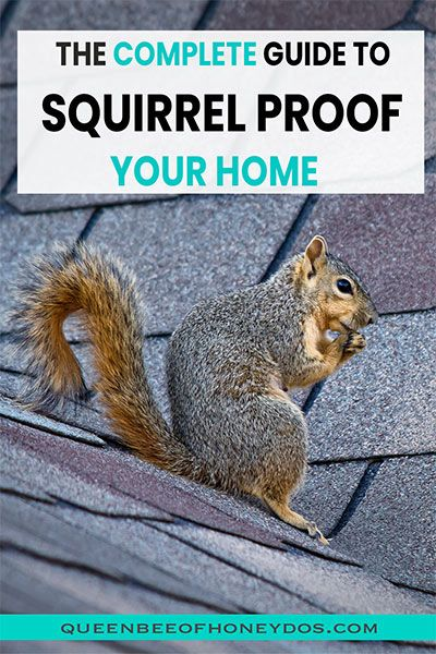 Prevent Squirrels Accessing Your Attic Queen Bee Of Honey Dos In 2020 Get Rid Of Squirrels Squirrel Prevention