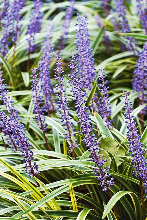 Brighten up under tree areas and other shady spots in your landscape with these easy-to-grow, colorful shade plants. These are the best shade perennials that can make low-light shaded garden areas the greatest points of interest in your yard. #shade #landscape #plantsthatgrowintheshade #perennials #bhg