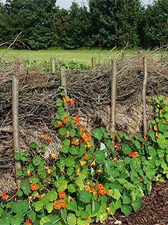 Zweigzaun Mit Blumen In 2020 Naturzaun Naturgarten Gartenzaun Ideen