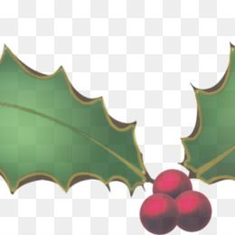 Holly Png Christmas Holly Holly Border Holly Leaf Holly Berries Holly Leaves Holly Berries And Leaves Christma Christmas Holly Holly Leaf Holly Berries