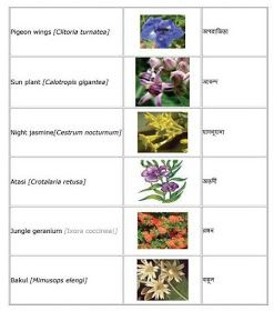 English Bengali Grammar Flowers English To Bangla Meaning Indian Flowers Flower Names Flowers Name In English