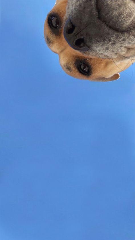 #dog #puppy #doglockscreen #dogsofinstagram #dogwallpaper #puppylockscreen #aesthetic #blue #blueaesthetic