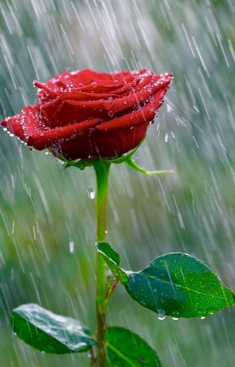 Rain  Saved by SRIRAM