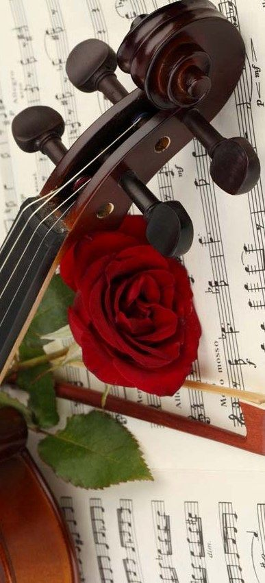 Pin By Woman Dog Part 2 On Valentines Day In 2020 Violin Music