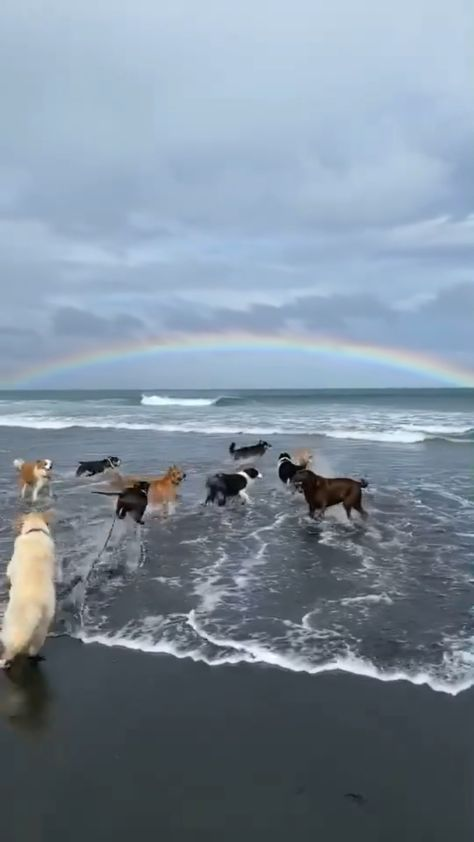 A Dogs paradise �🌈�🦮���🦺�