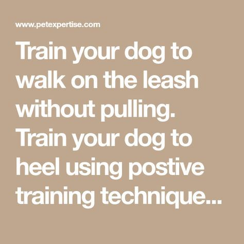 Train Your Dog To Walk On The Leash Without Pulling Train Your