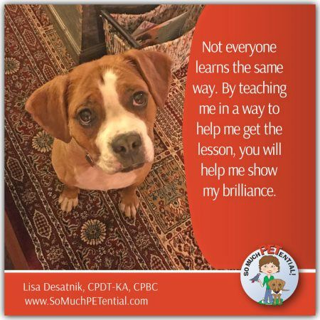 Cincinnati Certified Dog Trainer Lisa Desatnik Cpdt Ka Cpbc