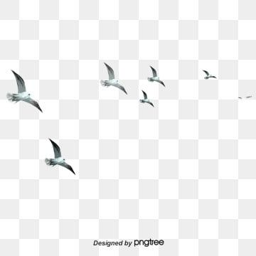 Bird Png Vector Psd And Clipart With Transparent Background For Free Download Pngtree Flying Bird Silhouette Birds Flying Bird Silhouette