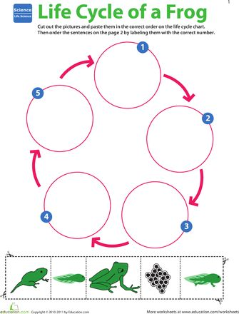 Life Science Learning: Life Cycle of a Frog | Worksheet | Education.com