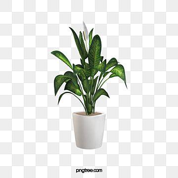 Vasos De Cactos Em Vaso Cacto Ilustracao Imagem Png E Psd Para Download Gratuito Plants Big Leaf Plants Leaf Background