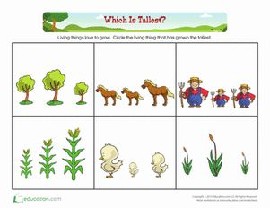 Comparing: Which Is Tallest? | Worksheets, Math worksheets and ...