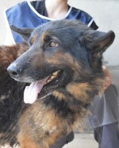 Hund Soger Nyt Hjem Formidles Via Anbefalelsesvaerdig Tysk