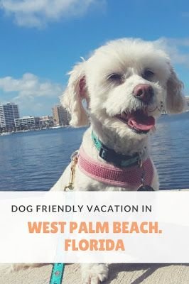 Take A Dog Friendly Vacation In West Palm Beach Florida Dogfriendly Pettravel Florida Dog Friendly Vacation Dog Friendly Beach Pet Friendly Beach