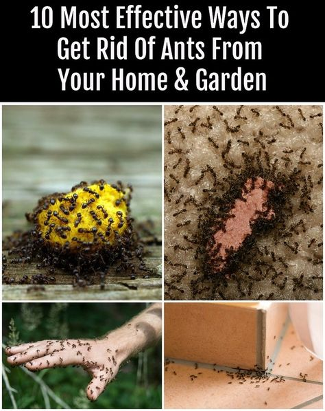 10 Most Effective Ways To Get Rid Of Ants From Your Home & Garden