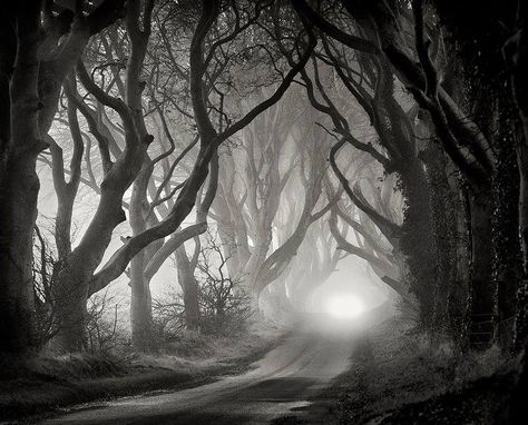 ©Gary McParland Landscape Photography trees eerie scary mist forest black white-I absolutely love shooting fog. Nothing more challenging...and the outcome is always beautiful.