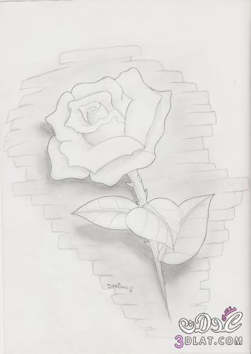 رسومات بالقلم الرصاص رسومات ورود 2015 رسومات ورود بالقلم الرصاص رسومات جد Cool Pencil Drawings Art Drawings Simple Art Drawings Sketches