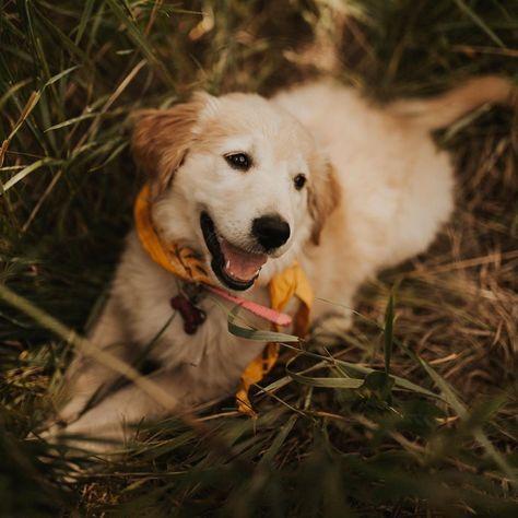 Super Cute Puppies, Super Cute Animals, Cute Little Animals, Cute Dogs And Puppies, Cute Funny Animals, Pet Dogs, Dog Cat, Baby Animals Pictures, Cute Animal Photos