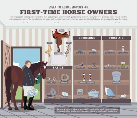 Basic Supplies Every First-Time Horse Owner Needs