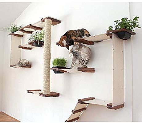 amazon cat wall shelves