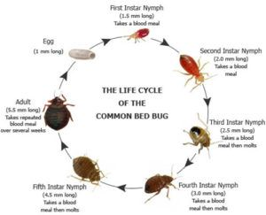 How To Get Rid Of Bed Bugs Advanced Termite And Pest Control In 2020 Bed Bugs Termite Control Bed Bugs Treatment