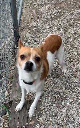 Dogs For Adoption Petfinder In 2020 Dog Adoption Dogs Adoption