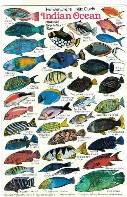 Pin On Ocean Creatures