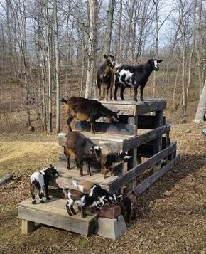 DIY Toys For Your Goats - your goats will love these