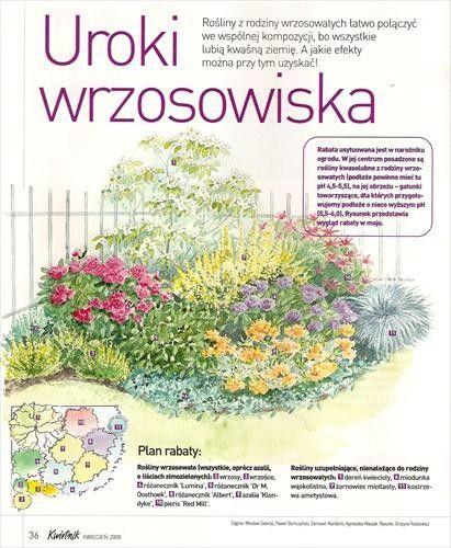 Zdjecie 6 41 W Aranzacji Rabaty W Ogrodzie Kompozycje Projekty I Inspiracje Deccoria Pl In 2020 Aquaponic Gardening Aquaponics Garden