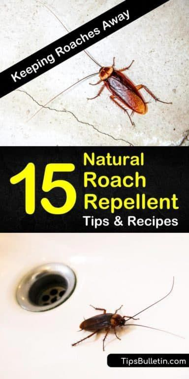 Nobody Wants Nasty Cockroaches Crawling Around Their House Our