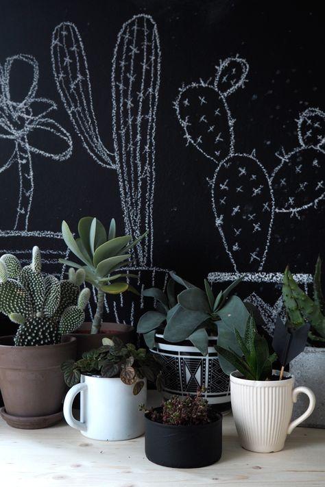 Kleine und große Kakteen. #pflanzenfreude