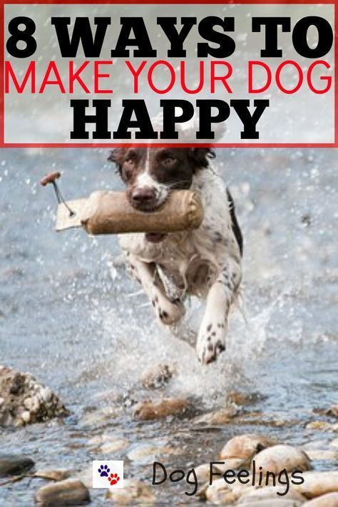 Pin By Anita Cheek On Animals Dogs Dog Lovers Happy Dogs