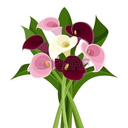 Calla Lilly Clipart Calla Lilies Flowers Orange Calla Lily Clip Art Calla Lily Clipart Calla Lily Vector Illustration Free Vector Graphics