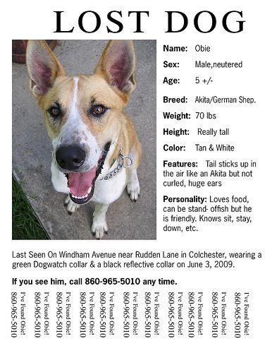 missing pet flyer