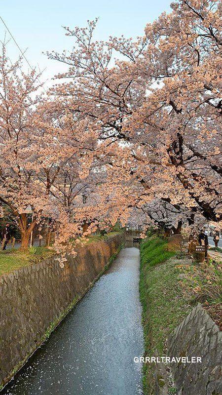 Top 10 Cherry Blossom Spots Of Kyoto Osaka Nara Japan Grrrl Traveler Kyoto Osaka Japan Travel