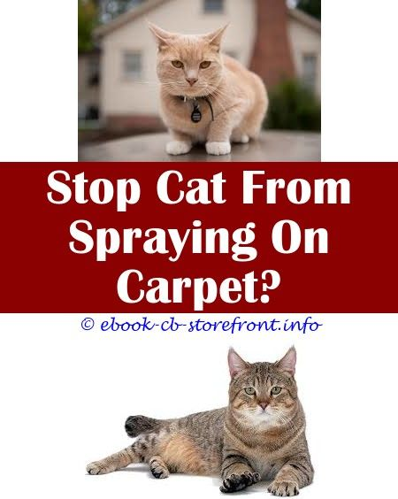 16 Hair Raising Stop Cat Spraying In Garden