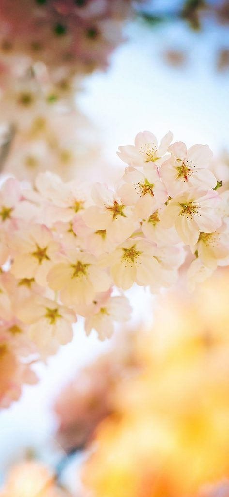 72 High Resolution Wallpapers For Your Shiny New Iphone X Iphone Wallpaper Iphone Plain Wallpaper Iphone Iphone Background Pink Flowers Wallpaper For Phone High resolution iphone spring wallpaper