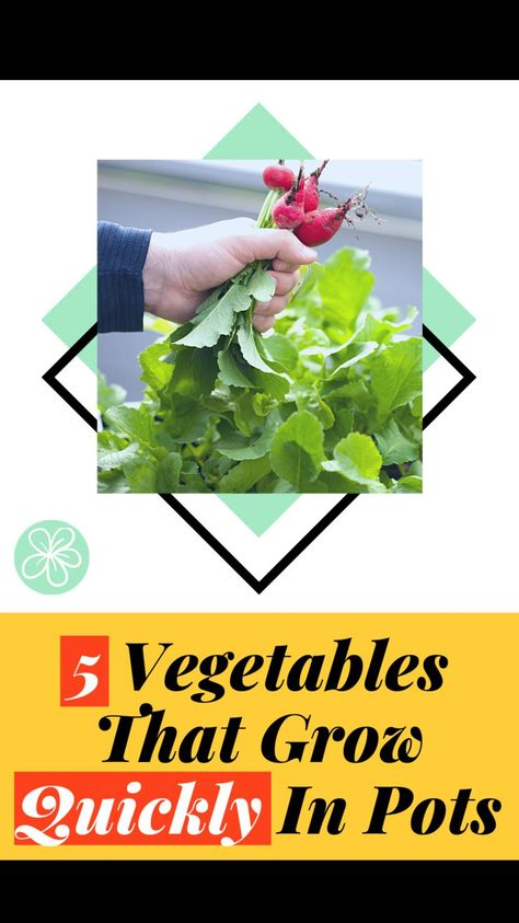 5 Vegetables That Grow Quickly In Pots