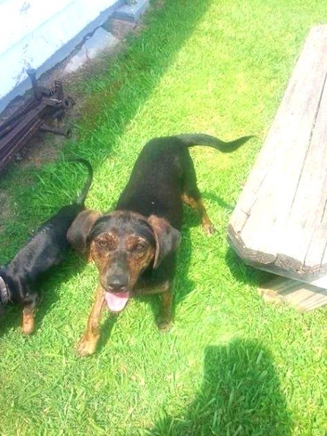 Dog Training Hacks When You Meet An Unfamiliar Dog Approach Them