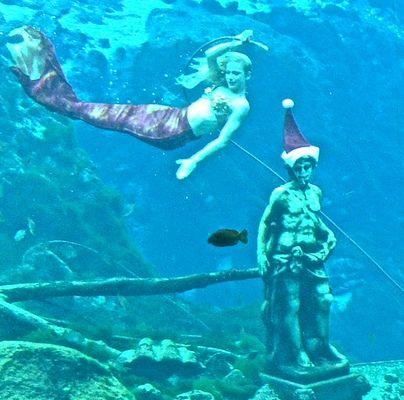 Who Wants to See the Weeki Wachee Mermaid Show? in 2020   Weeki