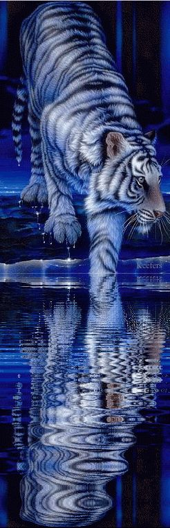 Blue Tiger - If you click on the full size pic, it shimmers...