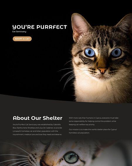 You Re Purrfect In 2020 Portfolio Web Design Limassol Cyprus Purrfect