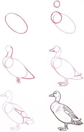 40 Drawing Tutorial For Occasional Artists Buzz 2018 Drawing Tutorial Bird Drawings Duck Drawing