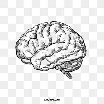 The Structure Of The Human Nervous System Is Positive Brain Illustration Brain Art Drawing Brain Drawing