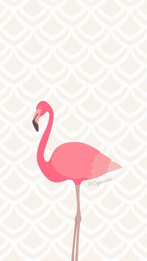 Fond d'écran flamant rose La Capuciine