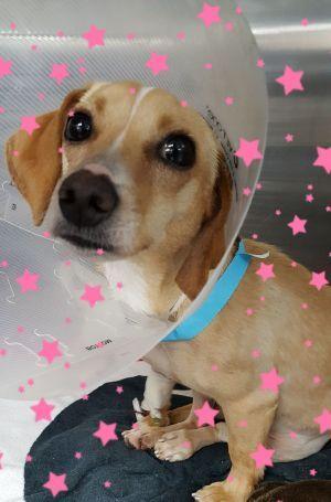 Adopt Treasure On Petfinder Dachshund Rescue Dachshund Dog Animal Rescue