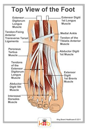 Top Of The Foot Labelled Diagram King Brand Tendons Muscles Tendonitis Foot Tendonitis Treatment Tendinitis