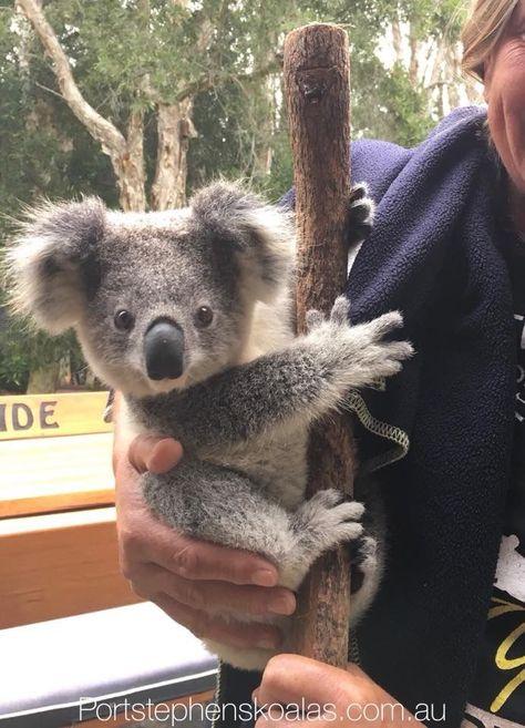 Wombat & Friends