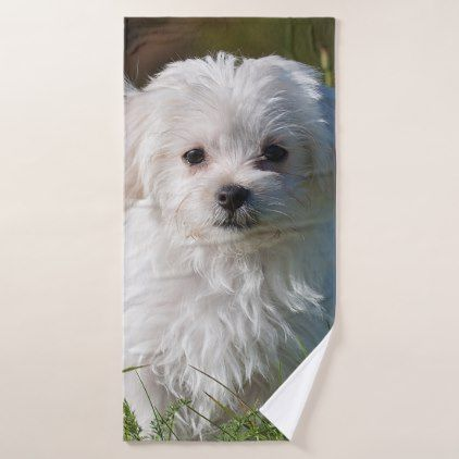 Maltese Puppy Bath Towel Maltese Puppy Dog Dogs Pet Pets