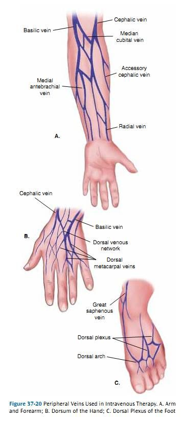 Arm Veins For Venipuncture   ... veins dorsal aspect of the hand b ...