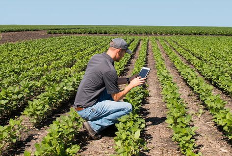 There's an App for That: How Mobile Agriculture Apps Can Help Farmers